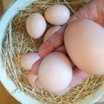 ちっちゃい卵